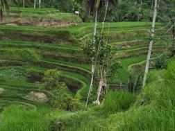 Indonesia Bali