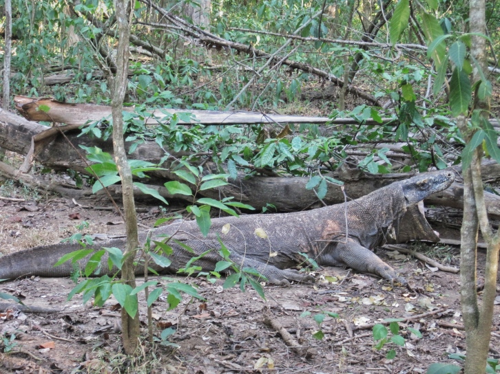 Indonesia Komodo