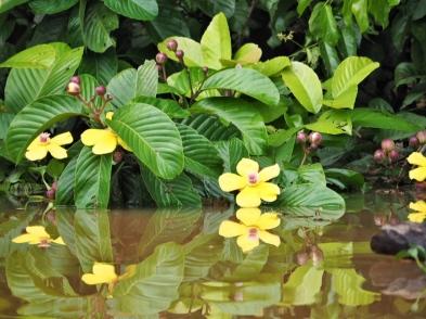 Flora Ox Bow Lake