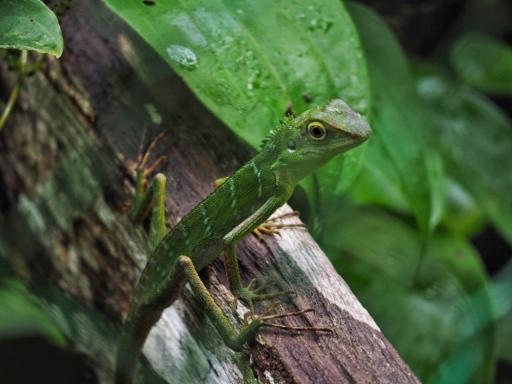 Some Lizard