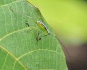 Random Bug