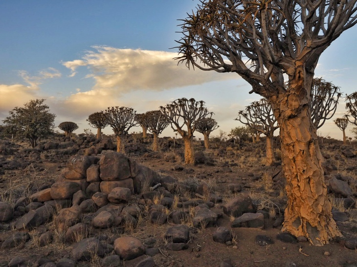 Namibia Quivertrees Forest