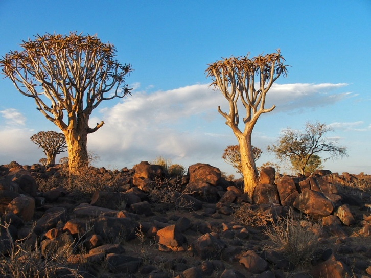 Namibia Quivertree Forest