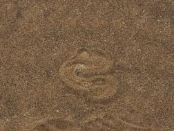Sidewinder Snake