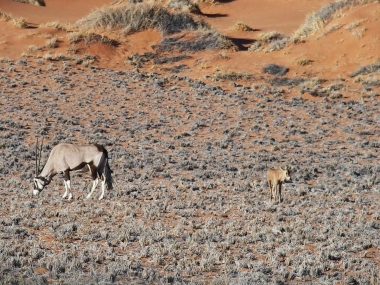 Oryx and Baby Oryx
