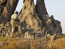 Huge ass termite mound