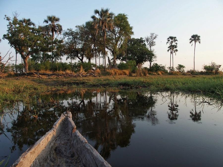 Walking With Giants: The OkavangoDelta