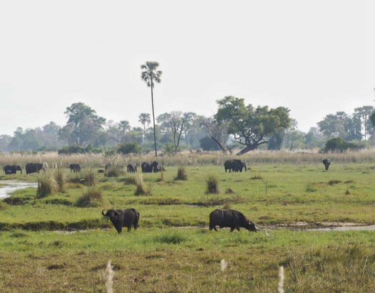 Botswana Okavango Delta