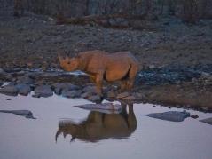 Rhino @ Halali