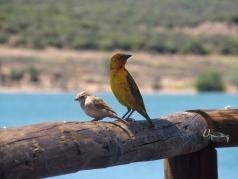 Birds we fed