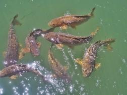 Fish we fed
