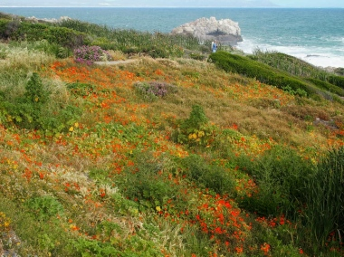 Fynbos on the cliff side