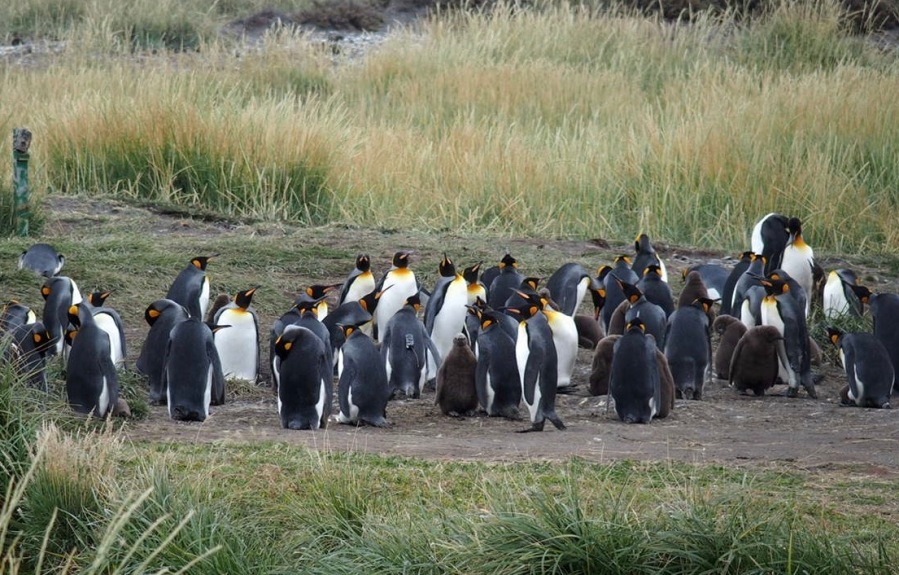 The Penguin Kingdom of Tierra del Fuego